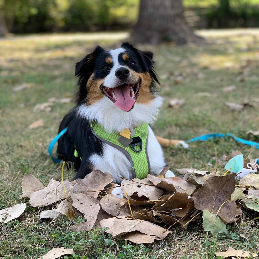 leaves dogs