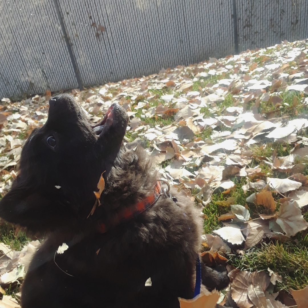 dogs fall leaves