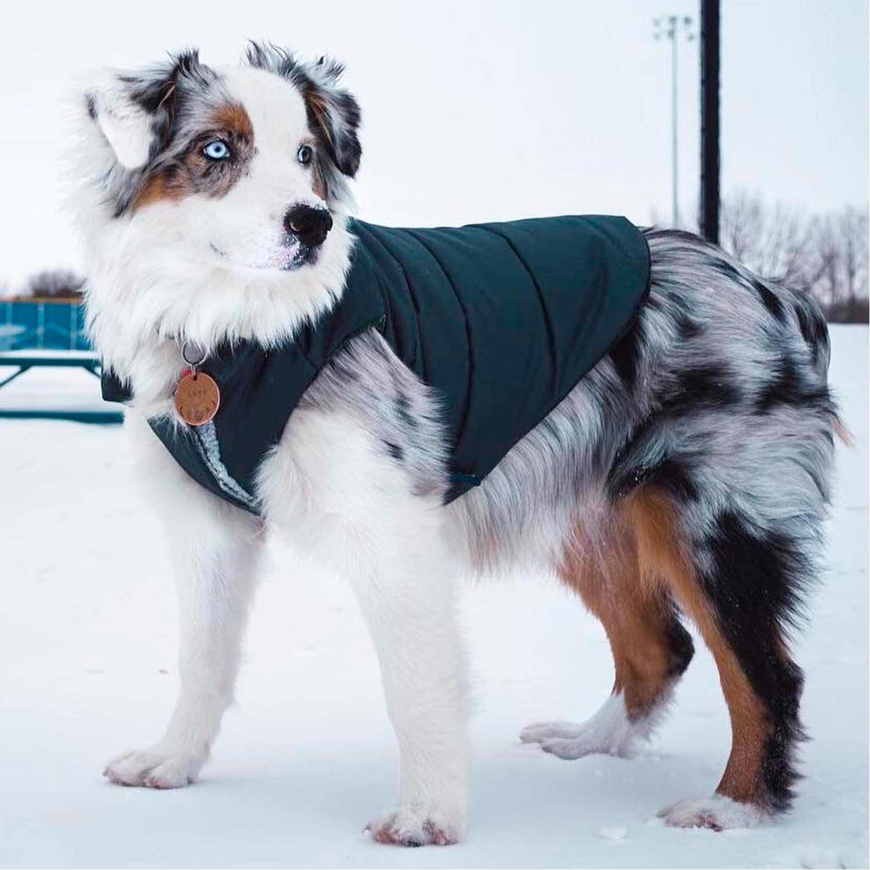 Django Puffer Dog Coat