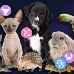 The Best Pet for You, Based on Your Zodiac