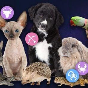Zodiac pets