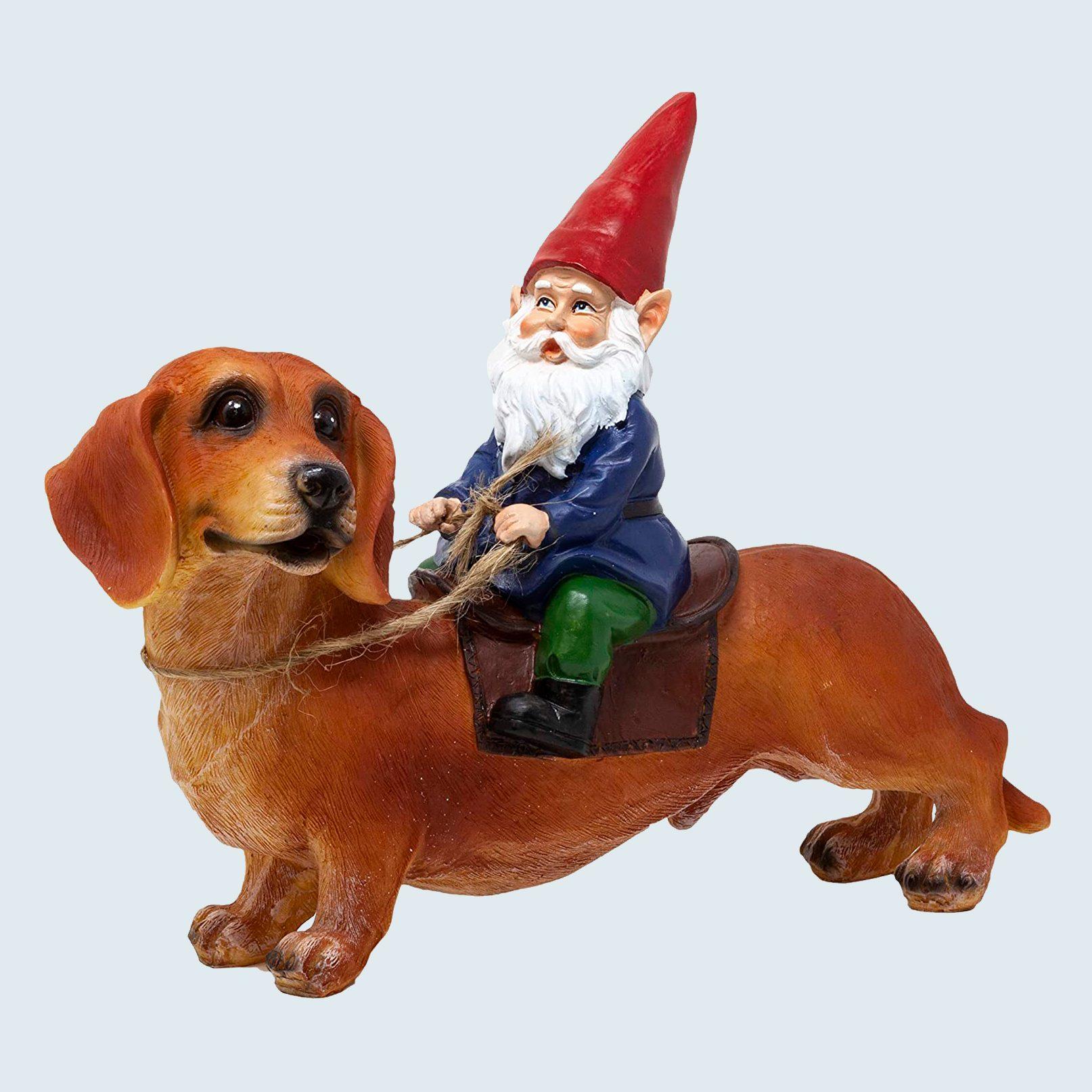 gnome riding dachshund garden statue