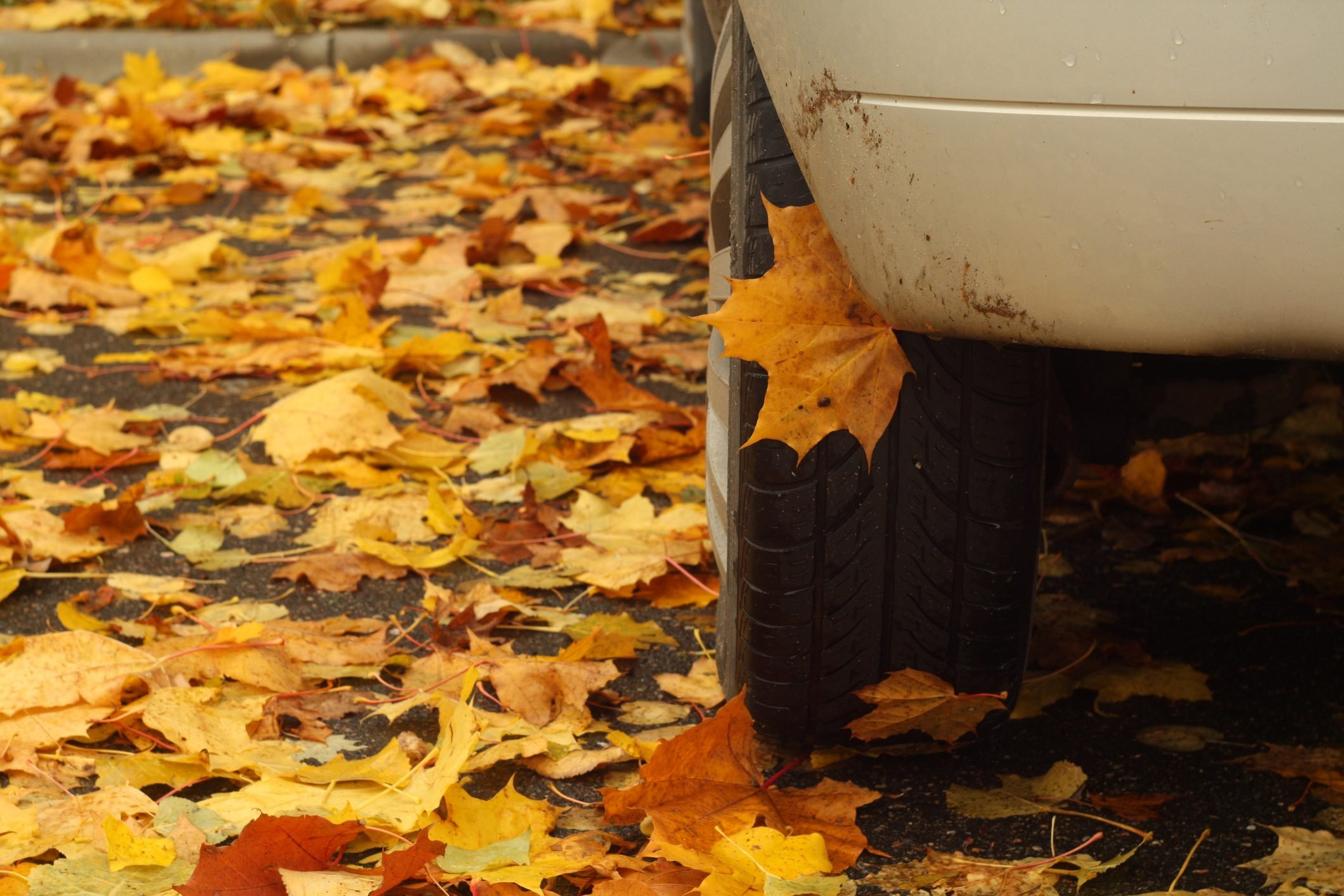 Orange fallen leaves and car.