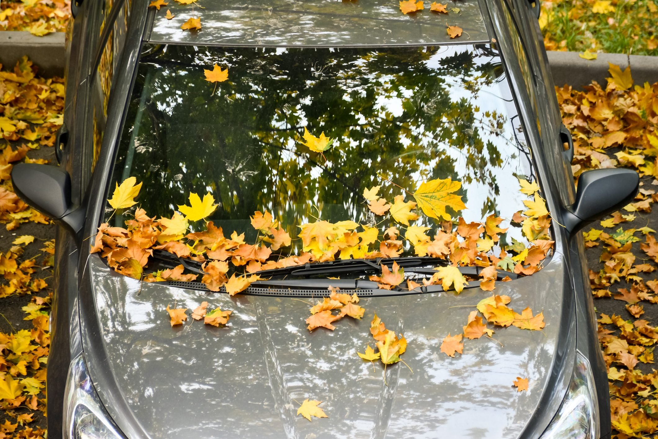 Bright and beautiful autumn leaves on the windshield of the car