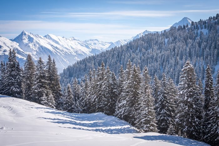 snow-covered firs against the background of the Alps in the ski resort
