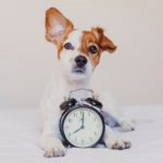 Do Dogs Have a Sense of Time?