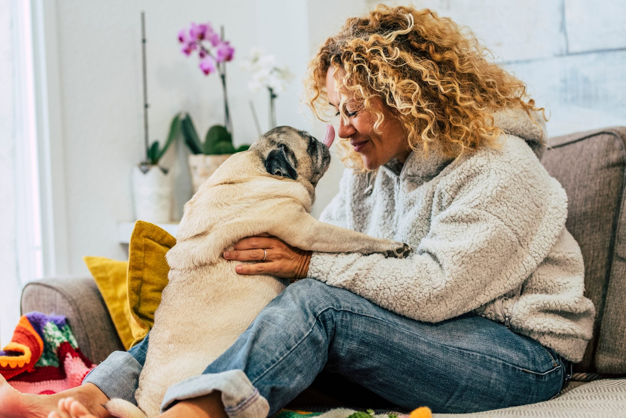 Playful happy activity at home with human woman people and funny pug dog kissing them on the sofa - cheerful young female play with domestic best friend at home