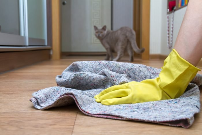 Girl in rubber gloves washes the floor at home with a rag. Concept of housework and housekeeping. Cat in the background