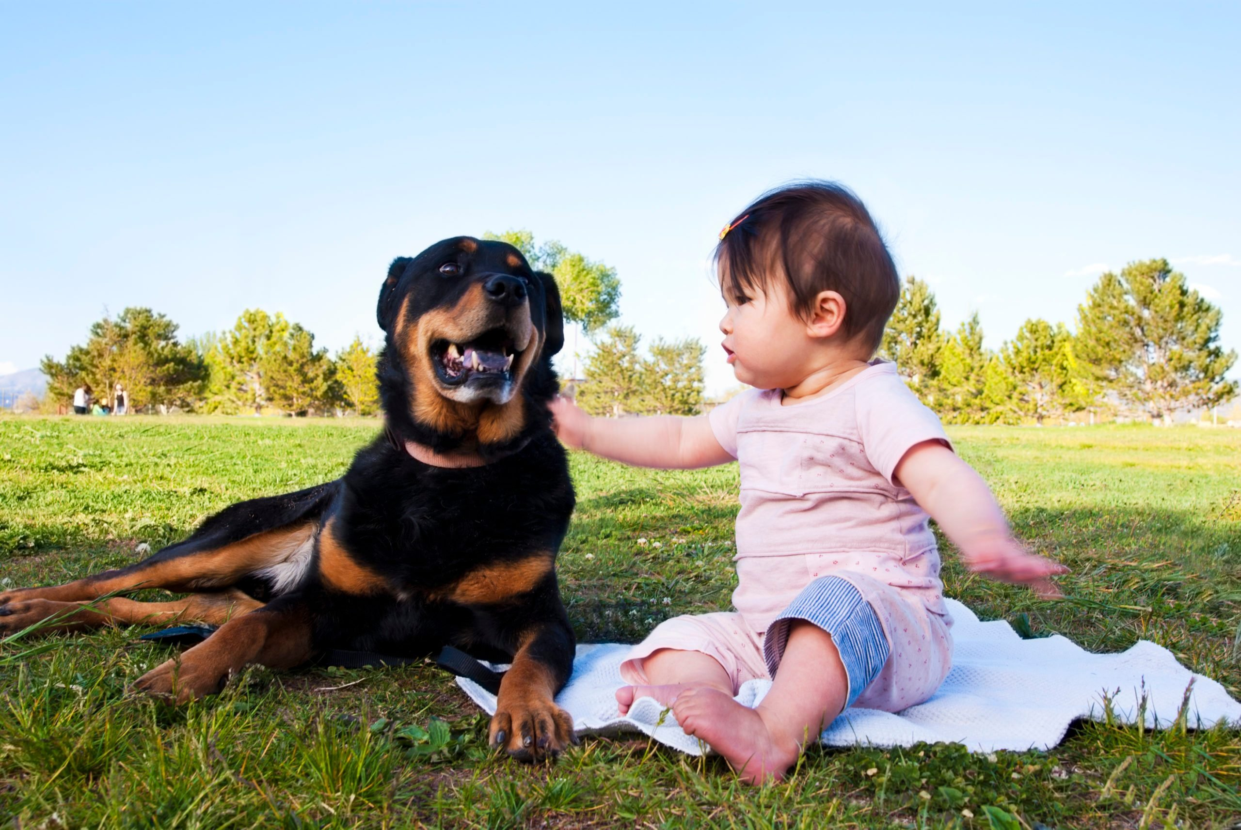 Friendship between dog and baby