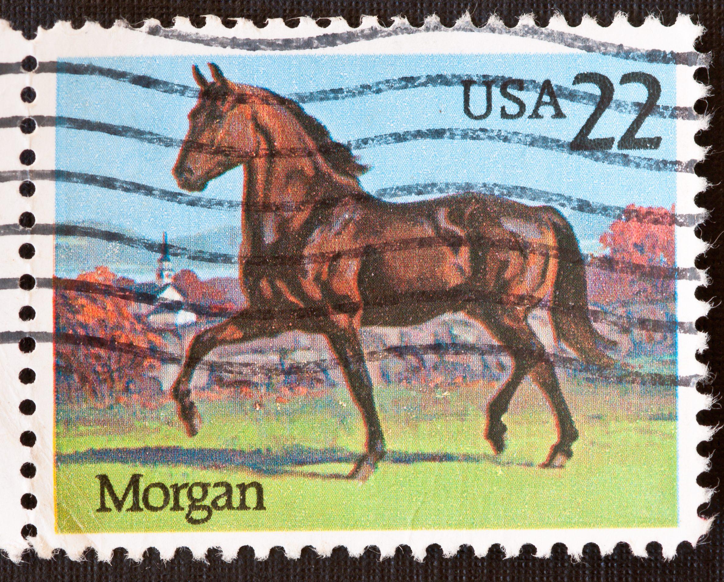 Morgan Horse Stamp