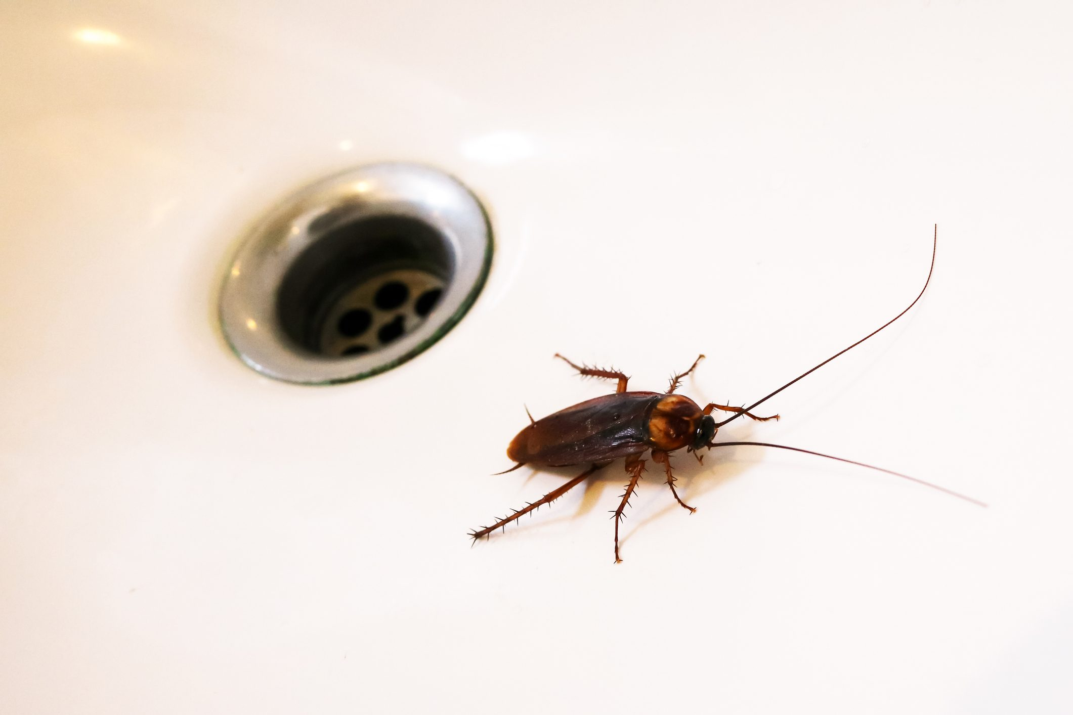 Cockroaches in the sink.