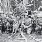 The Story of the Very First War Dog Platoon