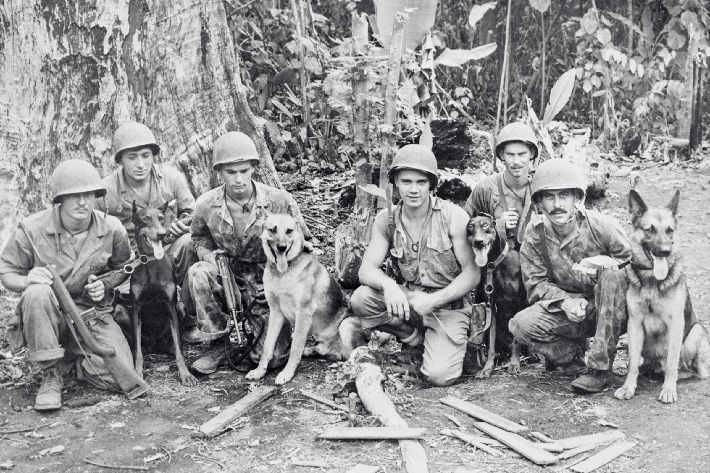 war dogs and their handlers
