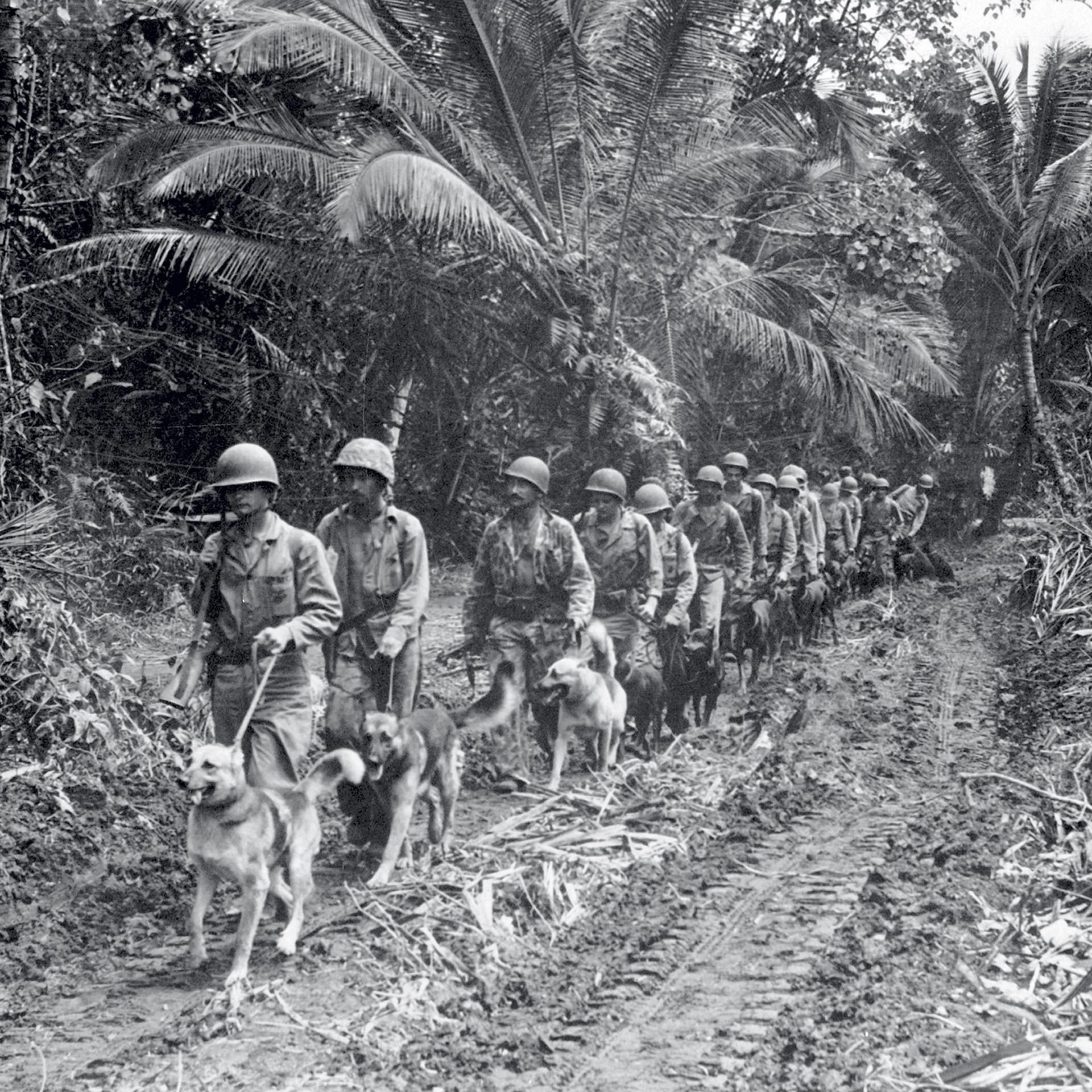 marines and dogs patrolling a trail