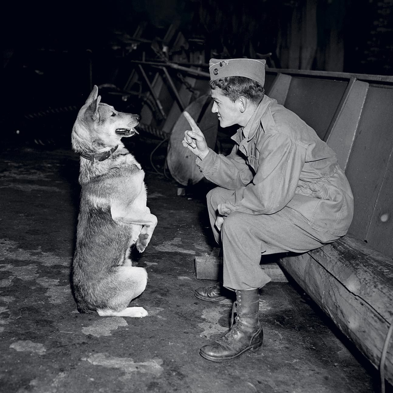 dog with his handler
