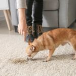 6 Best Products for Getting Pet Urine Out of Carpet
