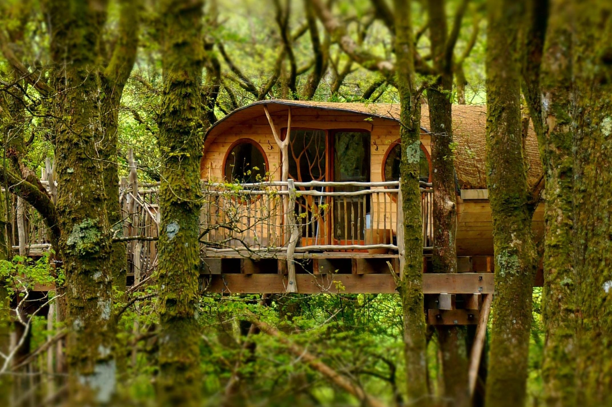 living-room treehouses