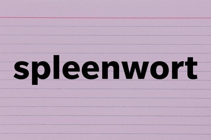 Spleenwort