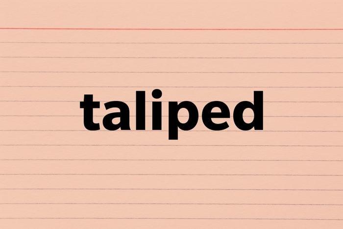 Taliped