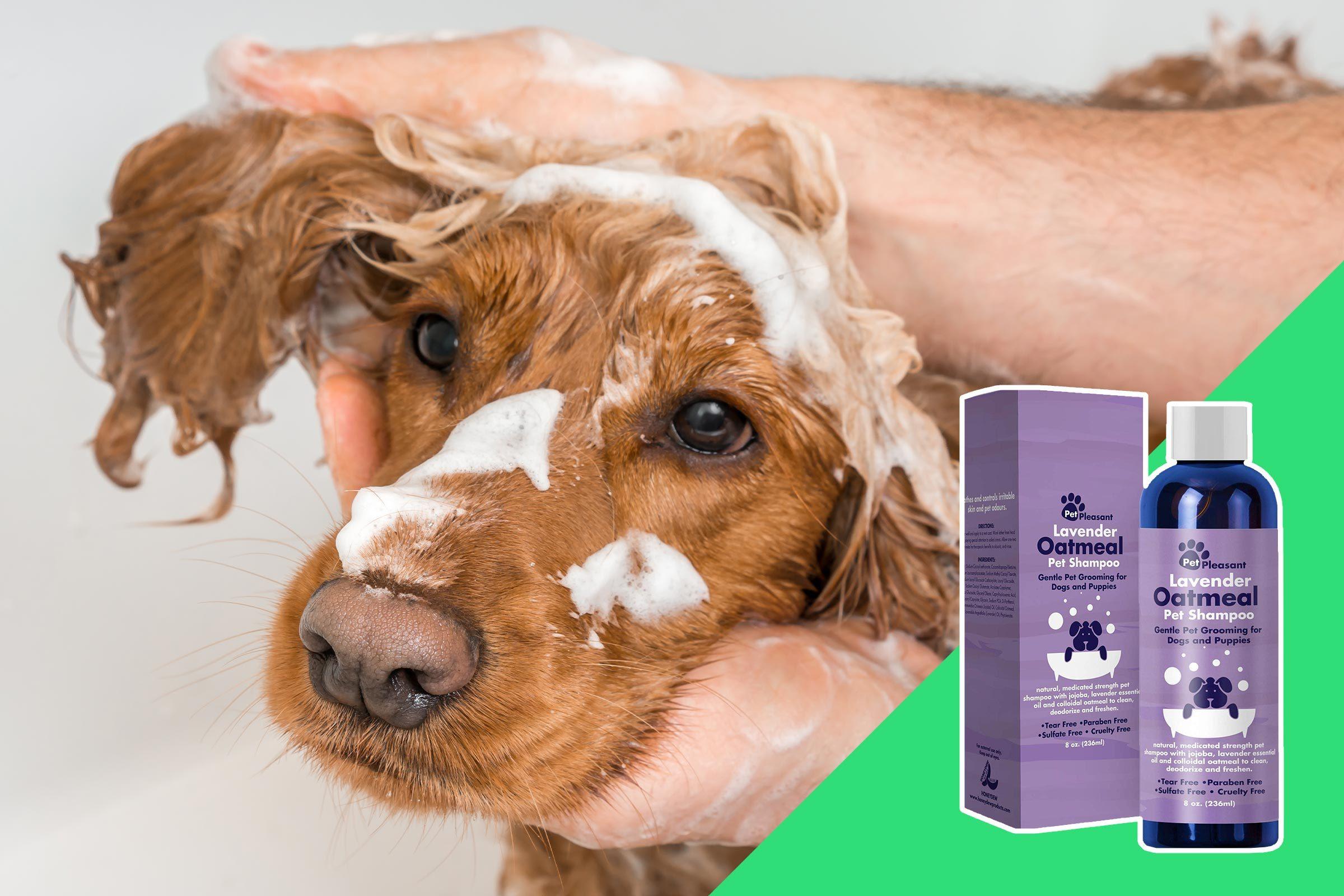 Washing a pet