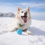 How to Keep Your Pets Safe This Winter