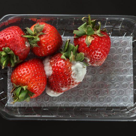 Food - Healthy Food & Eating, Food News & Recipes | Reader ...
