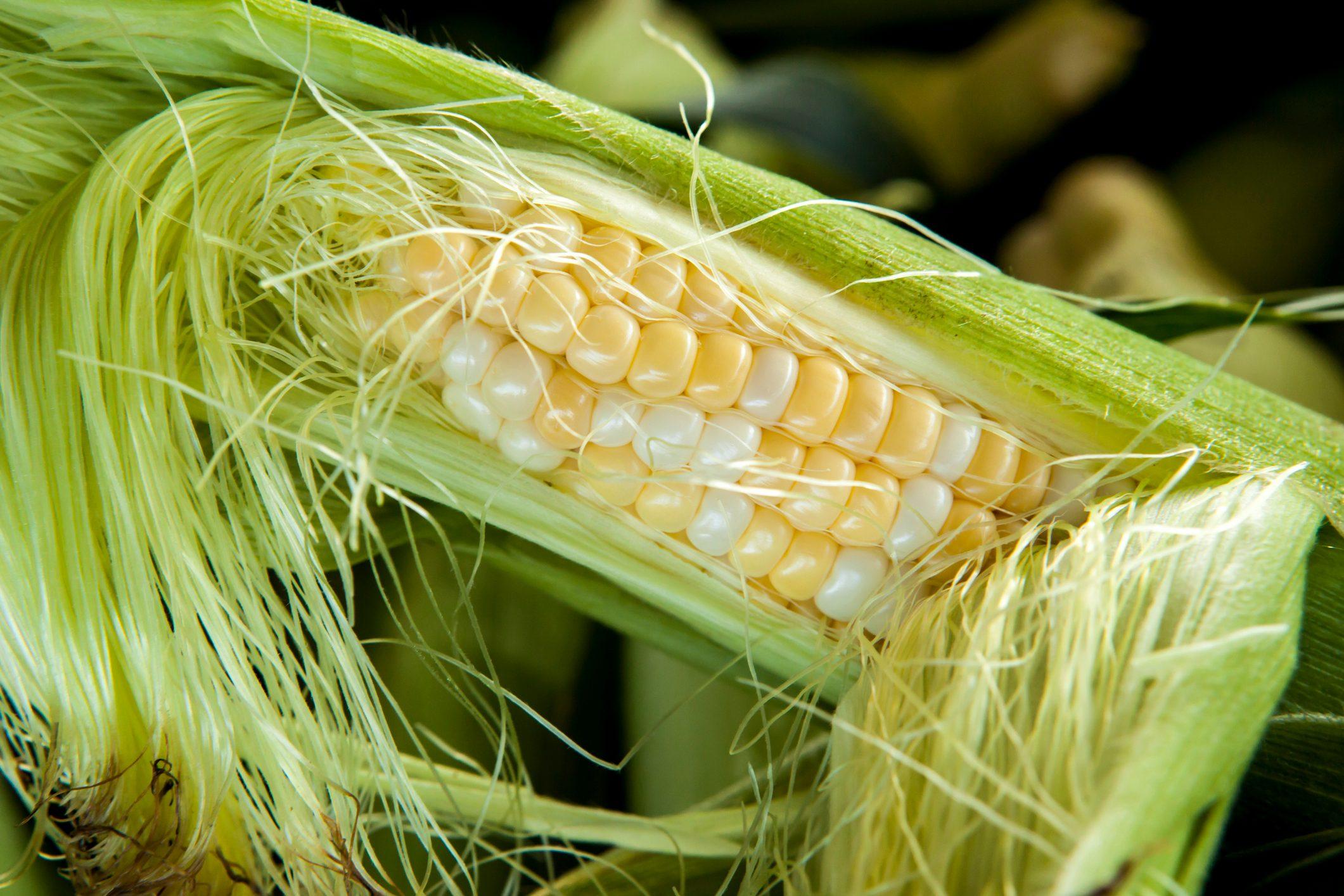 Ear of Fresh Corn