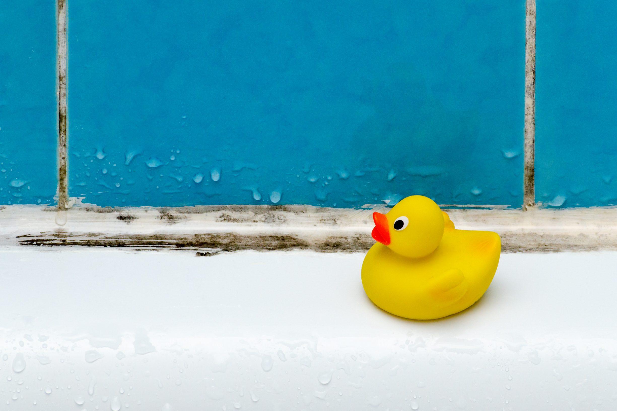 mold in bath, a duck toy, bathroom