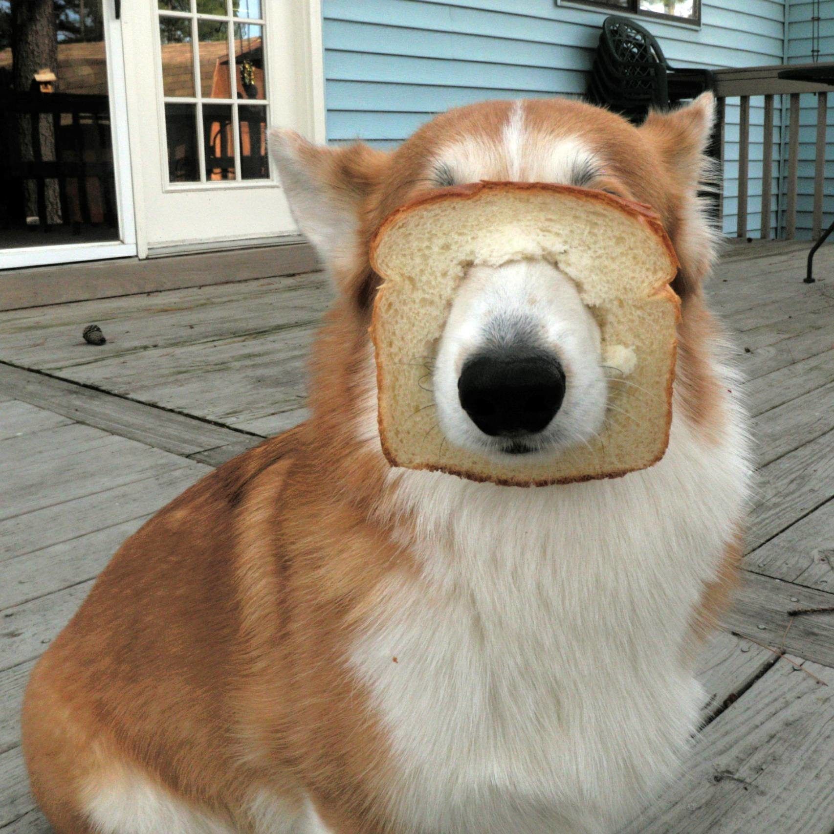 Close-Up Of Dog With Bread On Porch
