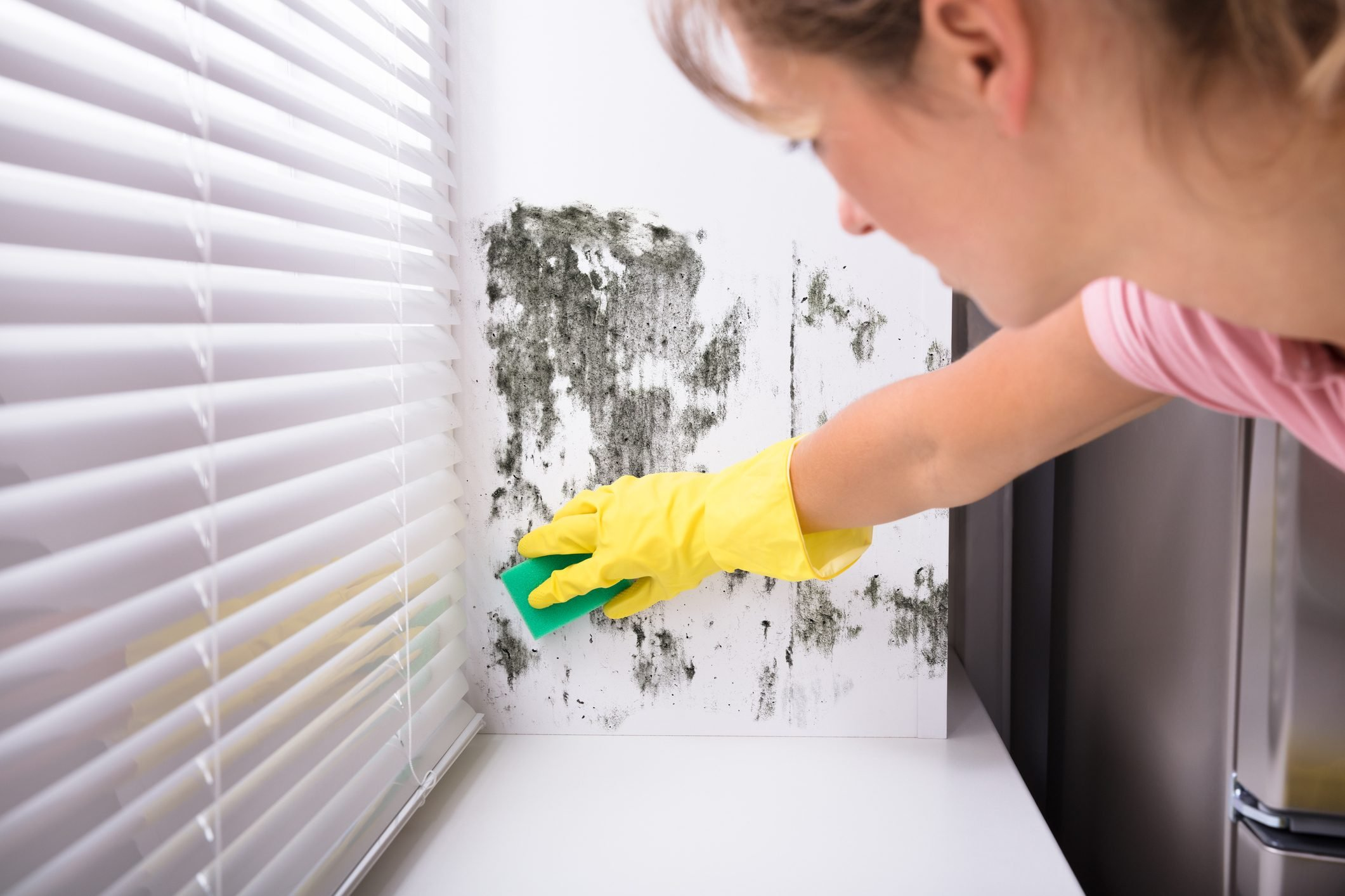 Woman Cleaning Mold From Wall