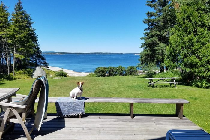 view of sea outside a main cottage with dog sitting on bench