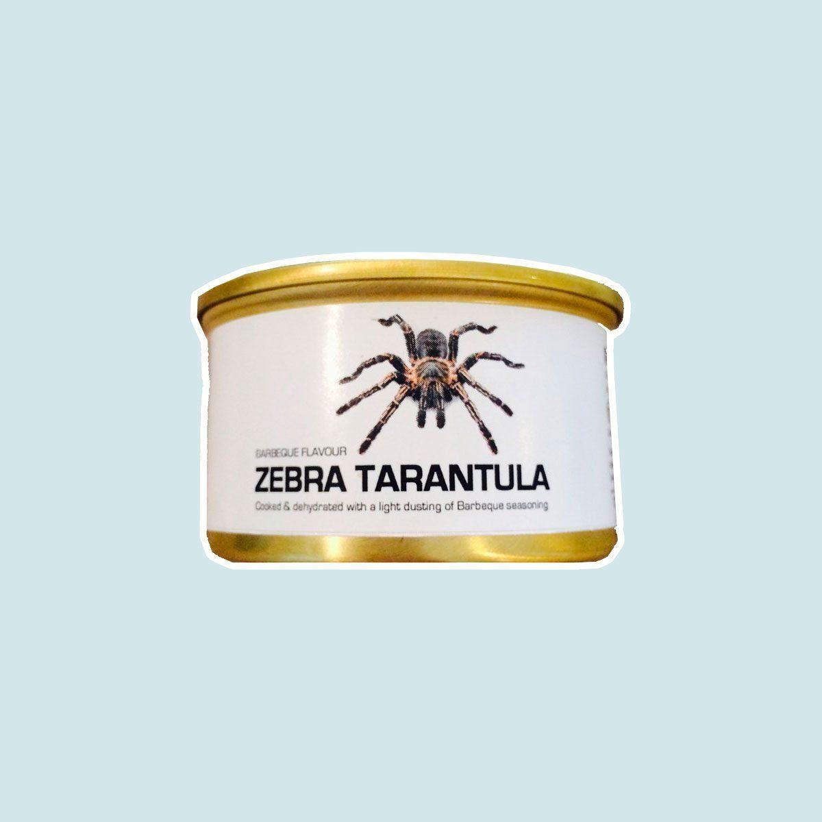 Zebra Tarantula