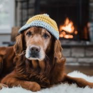 This Is the Best House Temperature for Pets