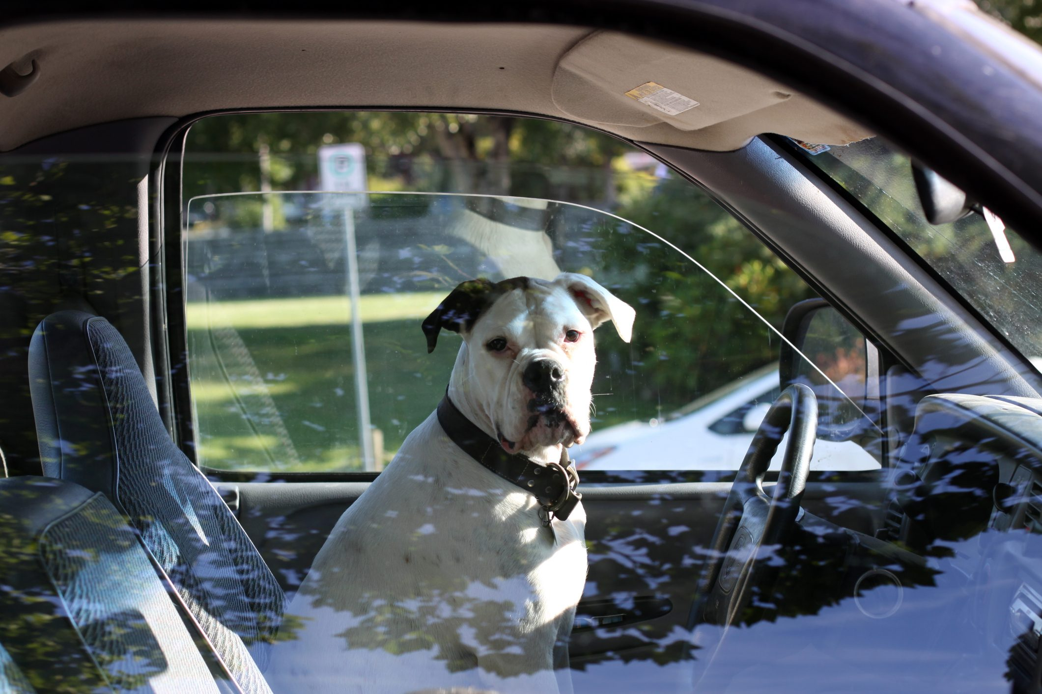 Dog on driver's seat