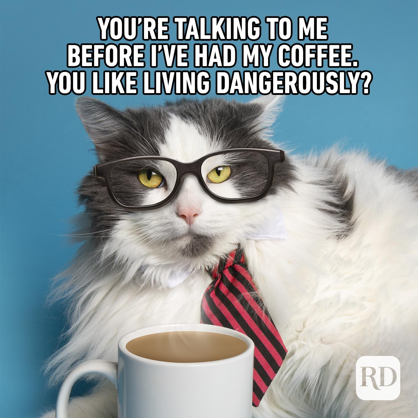 Image of cat in business attire drinking coffee. Meme text: You're talking to me before I've had my coffee. You like living dangerously?