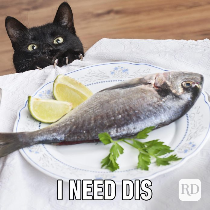 """Image of cat looking at fish that says """"i need dis"""""""