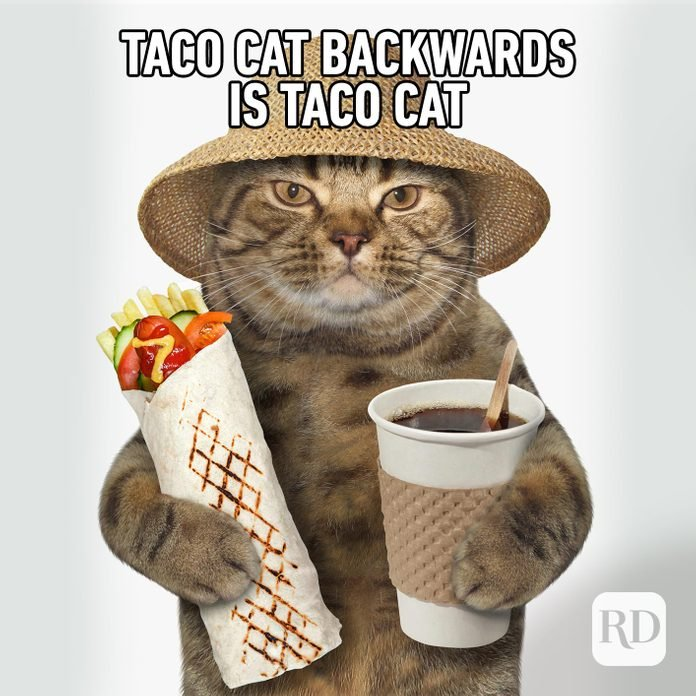 Image of cat holding a taco and a coffee. Meme text: Taco cat backwards is taco cat.