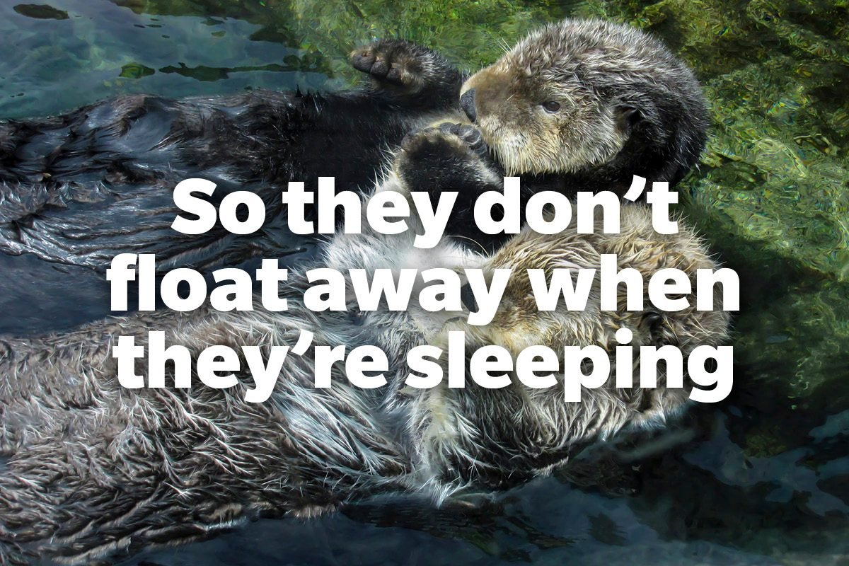 So they don't float away when they're sleeping