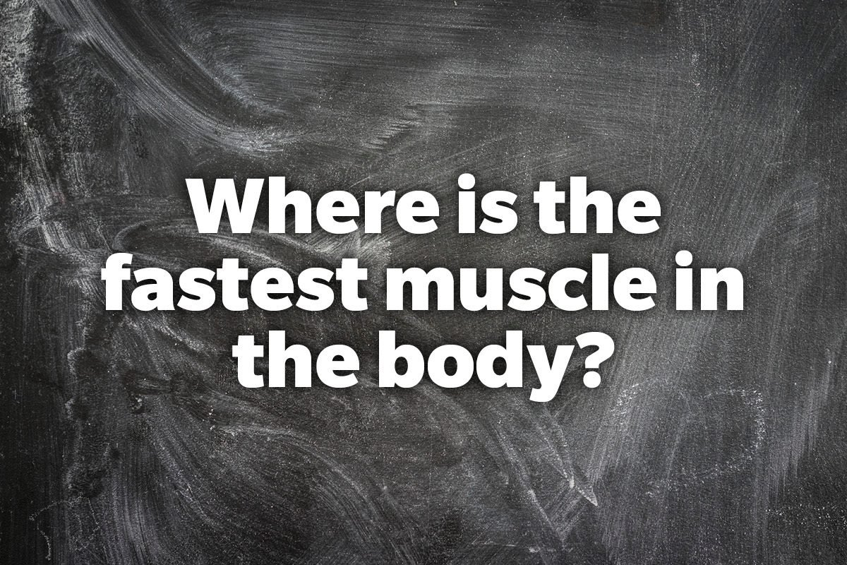 Where is the fastest muscle in the body?