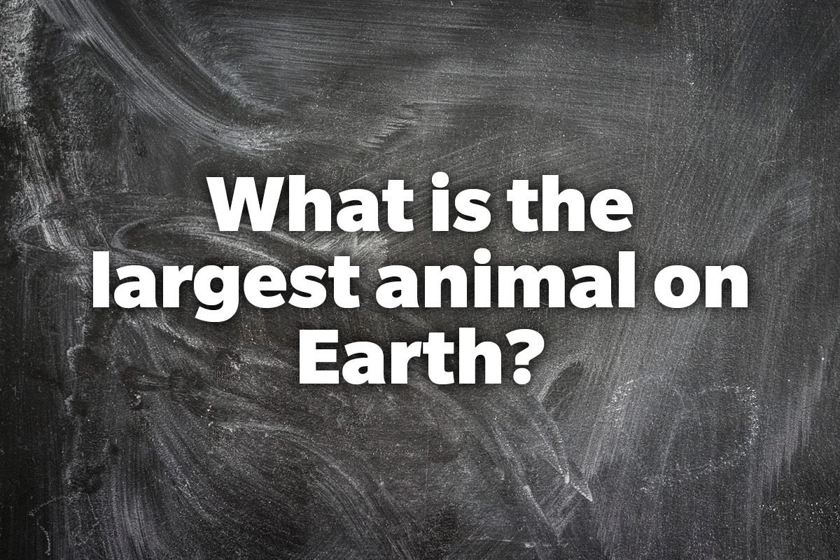 What is the largest animal on Earth?