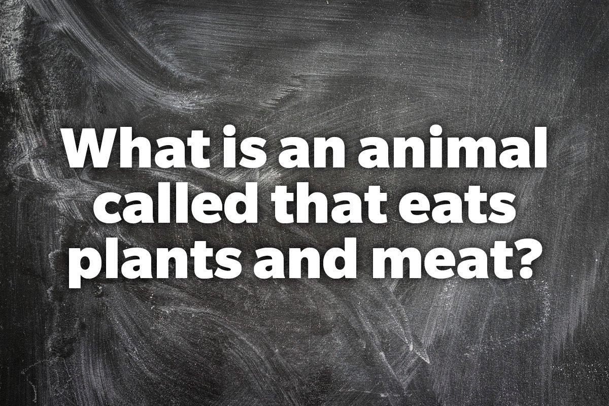 What is an animal called that eats plants and meat?