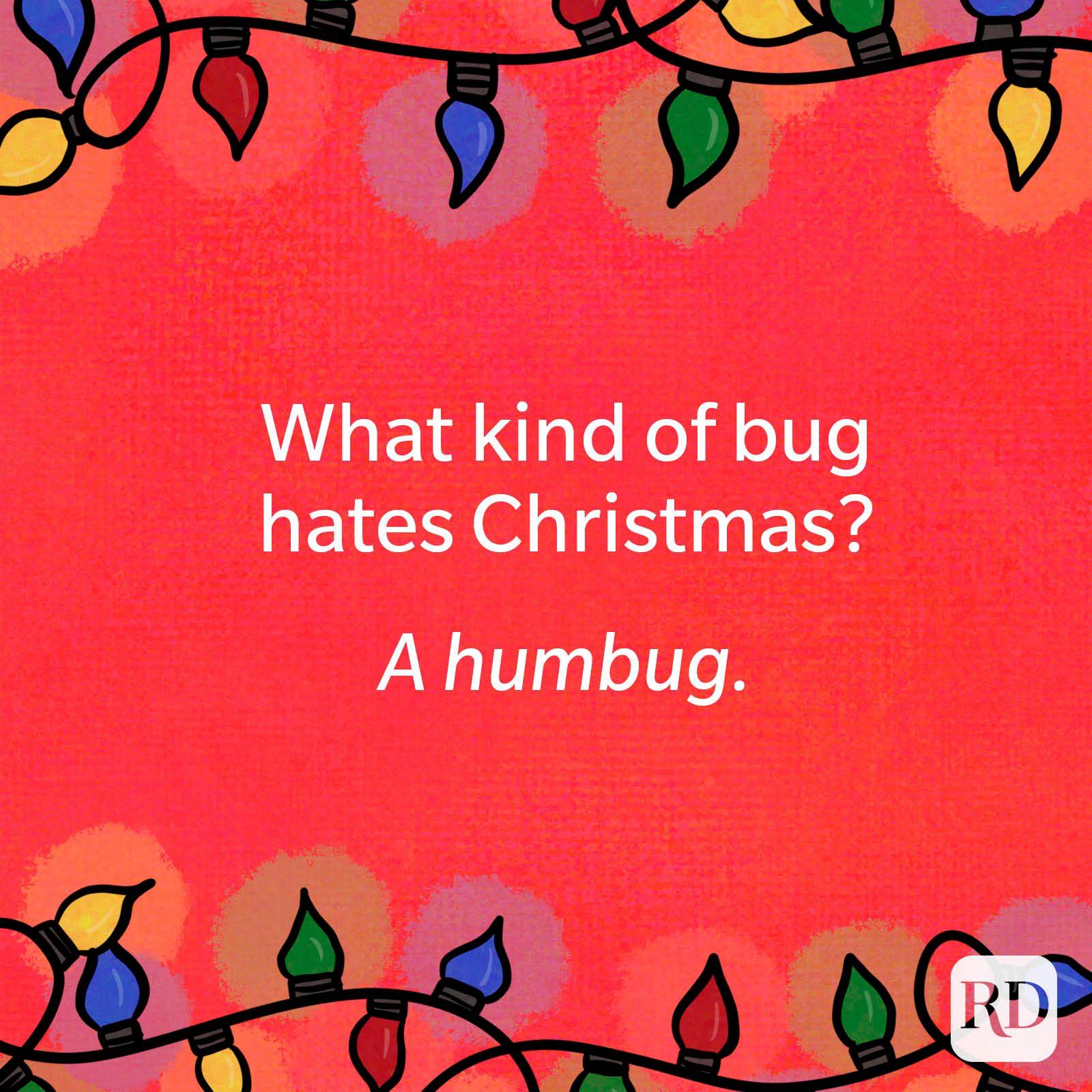 What kind of bug hates Christmas?