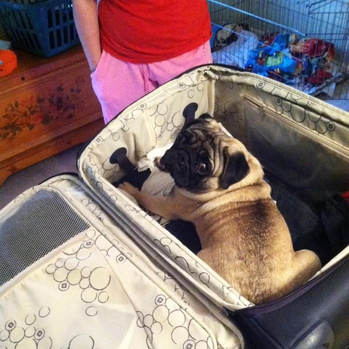 small dog sitting in a suitcase