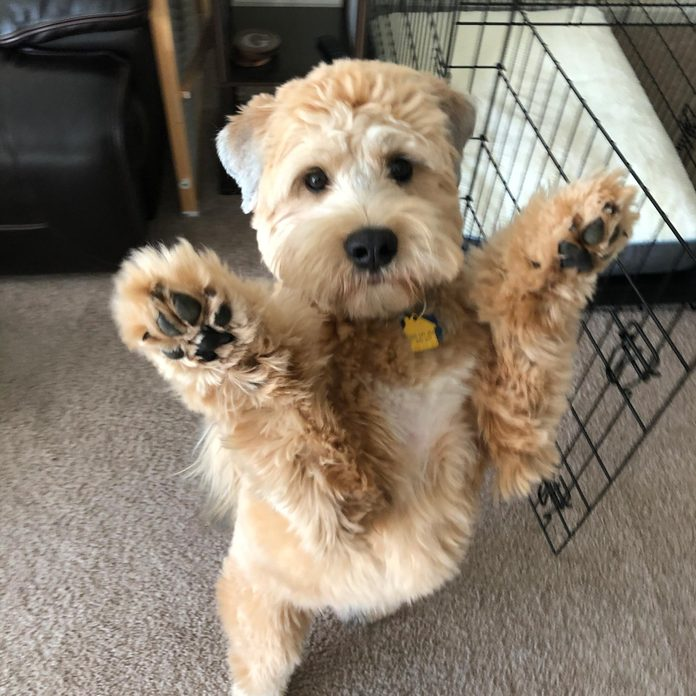 dog standing on two legs with his front paws up in the air