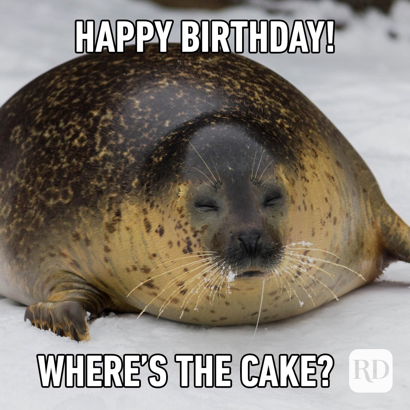 Happy Birthday! Where's the cake?