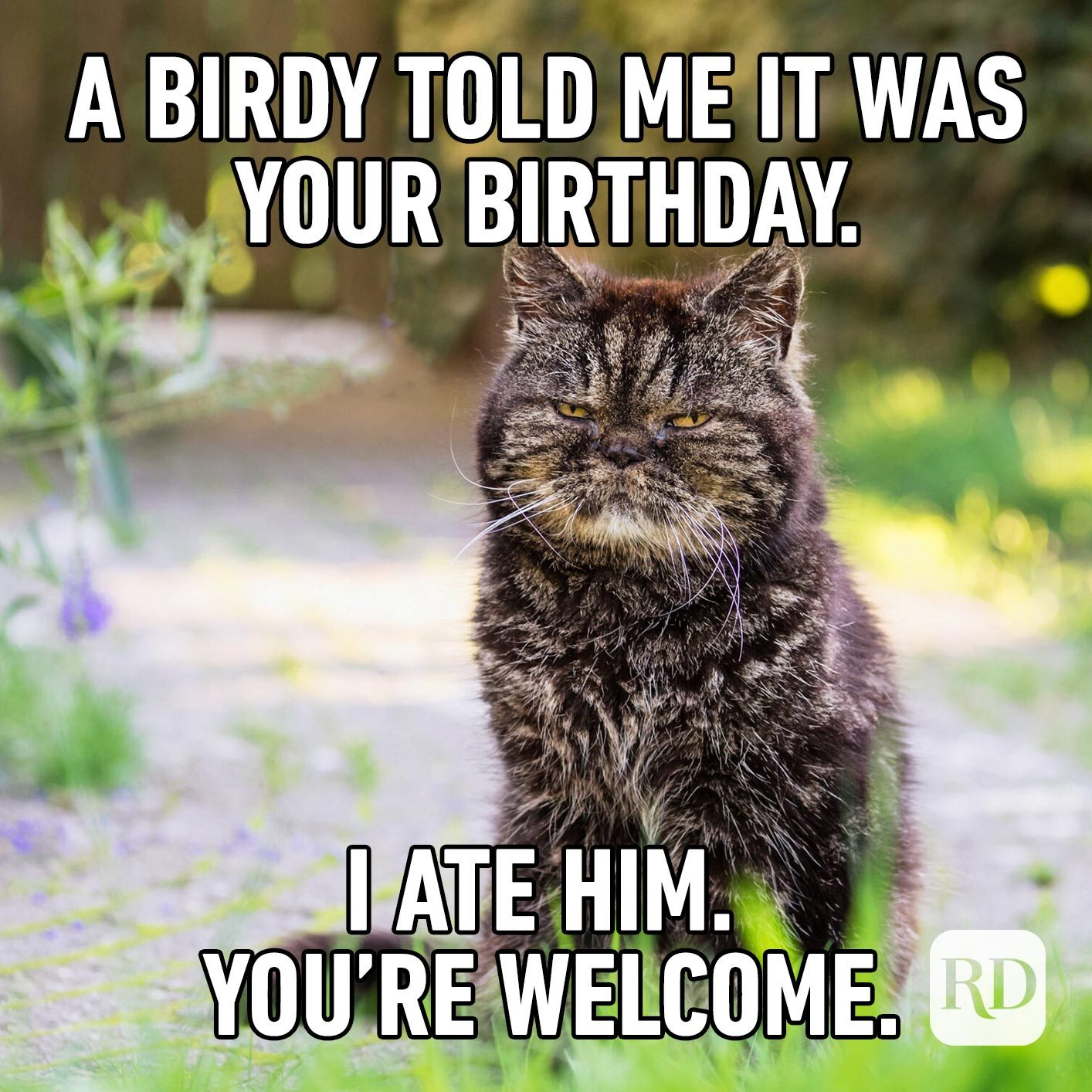 A birdy told me it was your birthday. I ate him. You're welcome.