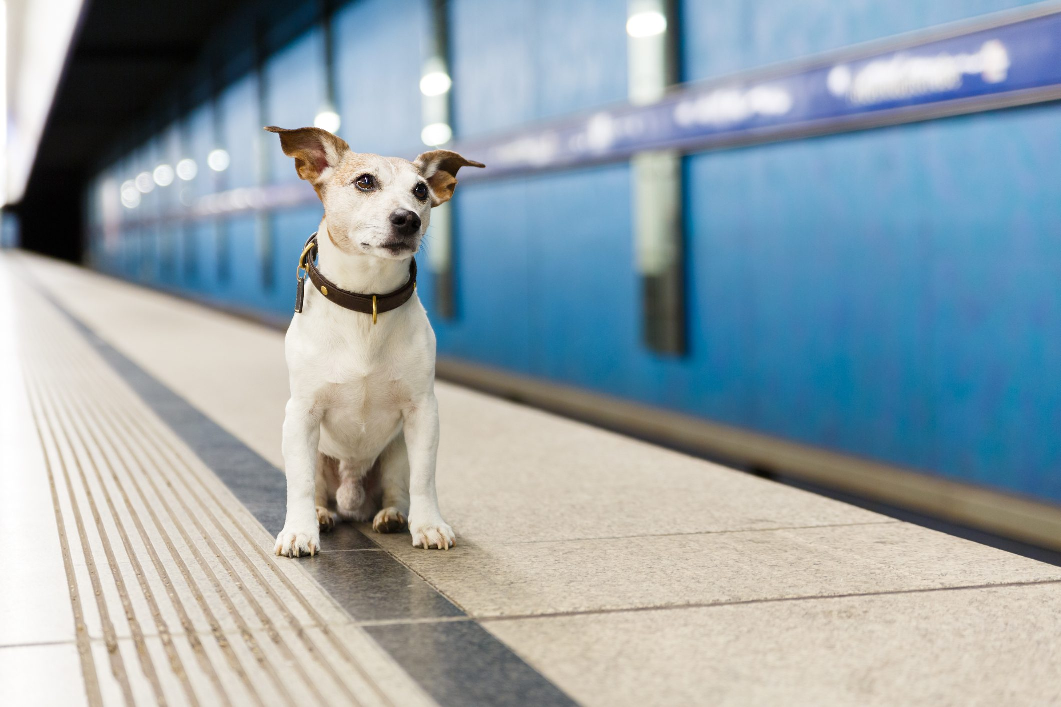 dog waiting for owner at rail train station