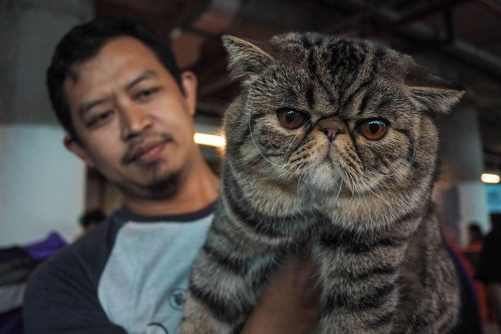 International cat show in Jakarta