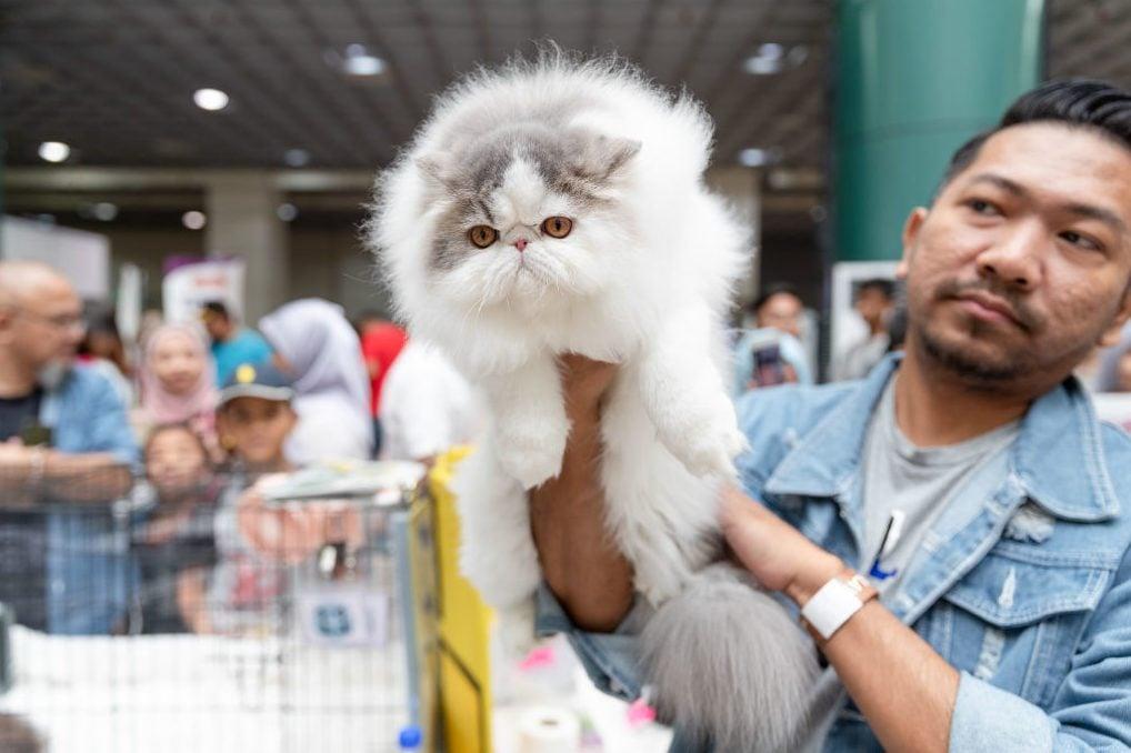 Ekspo Kucing-Cat Show In Kuala Lumpur, Malaysia