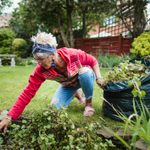 How to Grow a Chemical-Free Garden